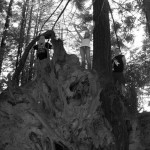 Cliff, Caitlyn & Crystal, Redwoods of California